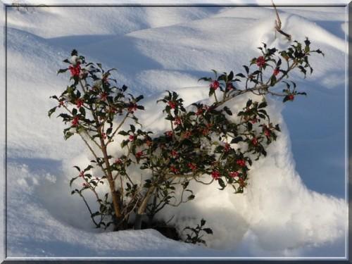 Ballade dans la neige (65)