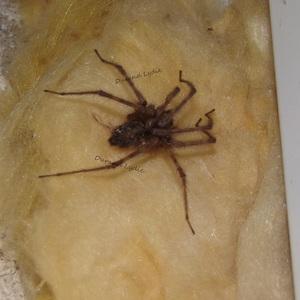 Araignée n°4 - On ne voit pas son corps donc difficile à identifier