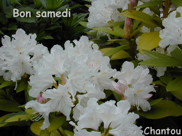 CHANTOUVIVELAVIE : BONJOUR - SAMEDI 28 03 2020