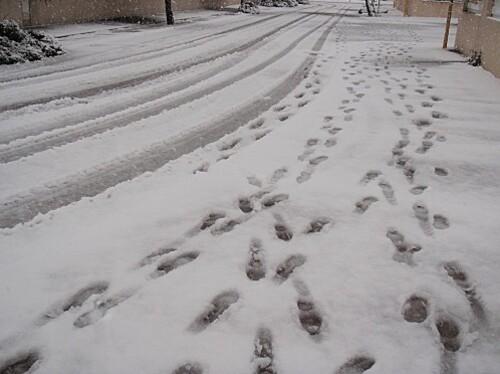 le barcares sous la neige 044