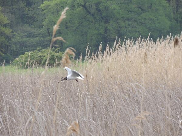 Oiseaux de Brenne