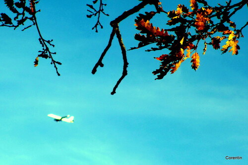 Branches et avion ...