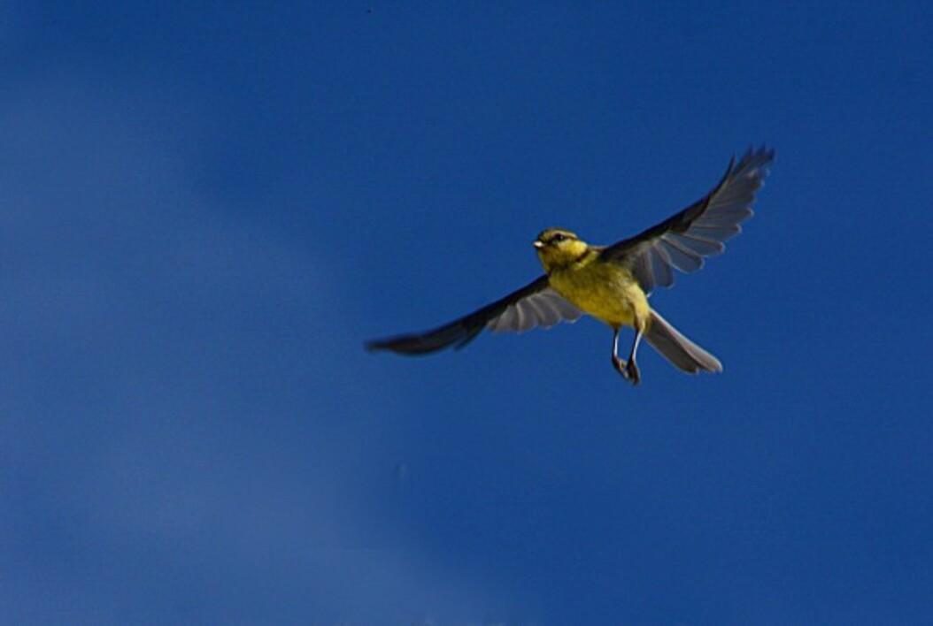 Oiseaux-2-6129-a_modifie-1.jpg
