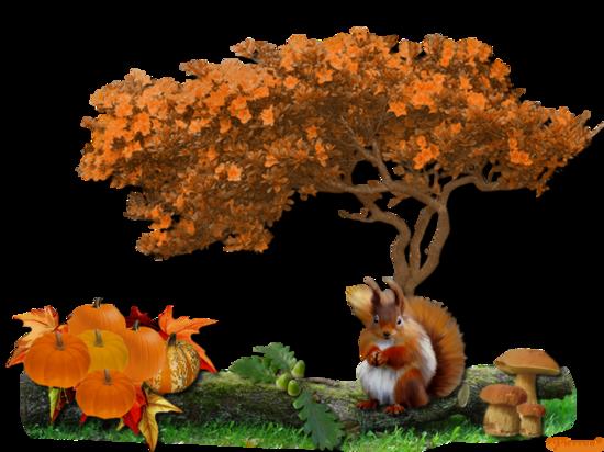 L'écureuil et l'automne