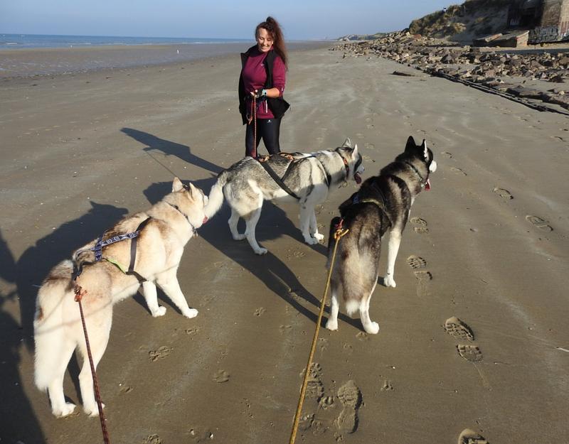 chiens des glaces en randonnée