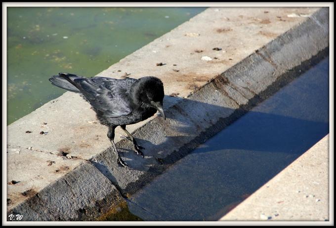 L'oiseau prend son bain