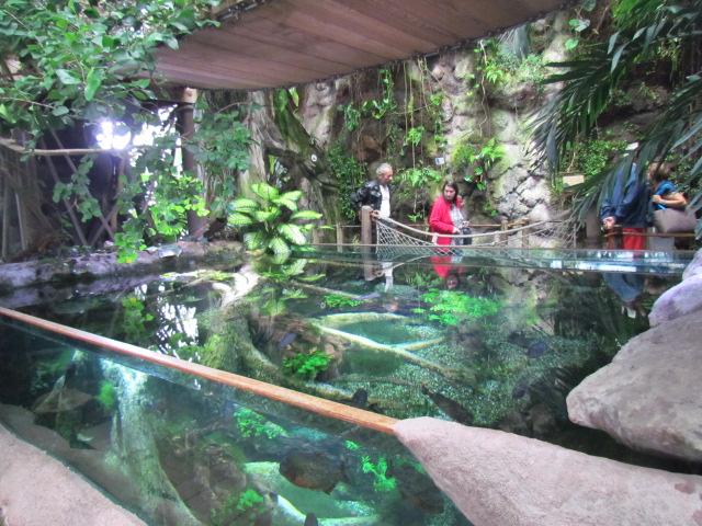 L 39 aquarium de la rochelle for Bassin exterieur pour tortue de floride
