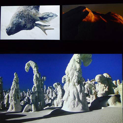 FUTURS HOMME/NATURE INSTINCTS VIE/MORT - 2