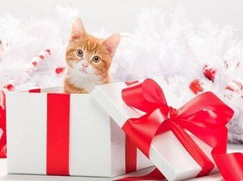 Un chat n'est pas un jouet de Noël