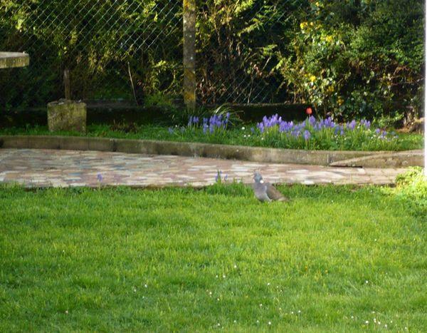 jardin-03.jpg
