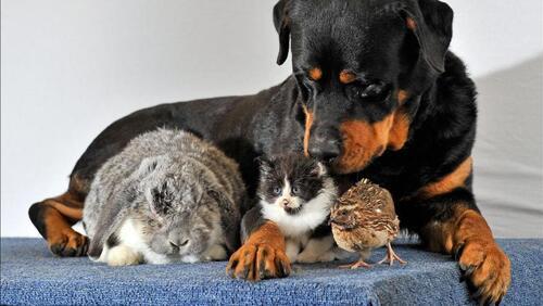 Code du bien être animal