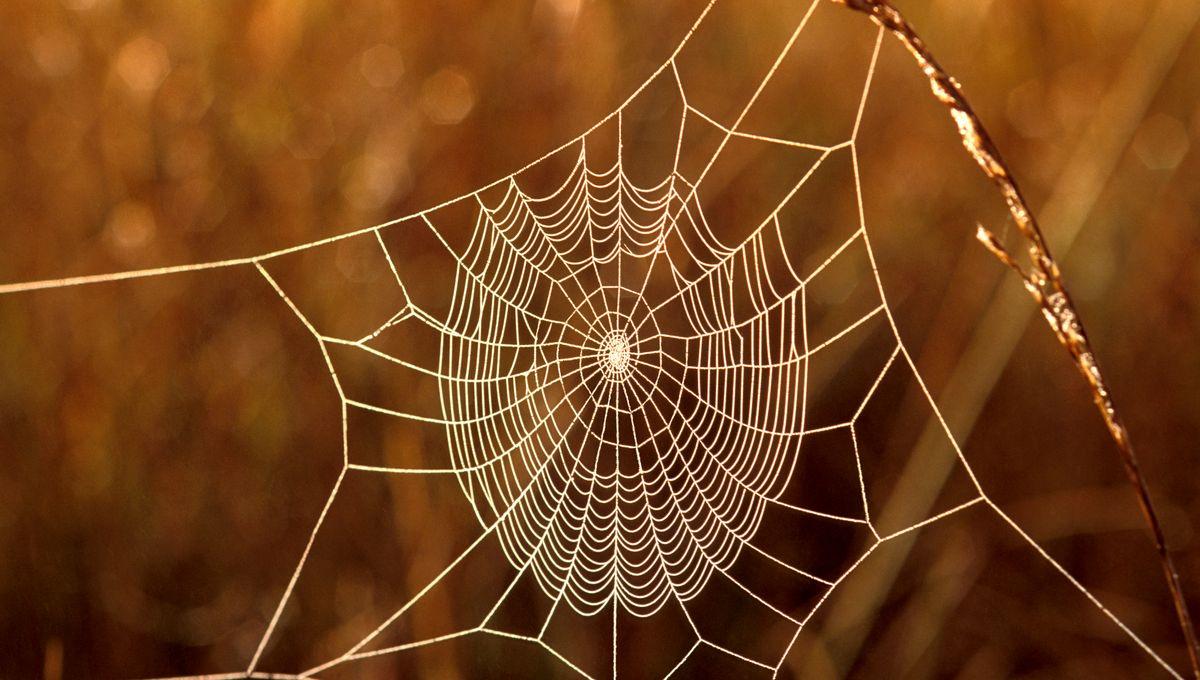 Musique de toile d'araignée