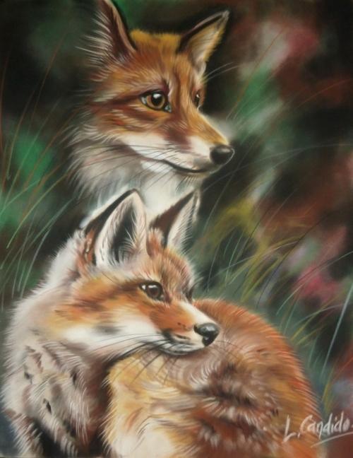 Les renards.