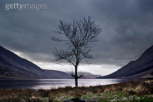 Solitude d'un arbre ...