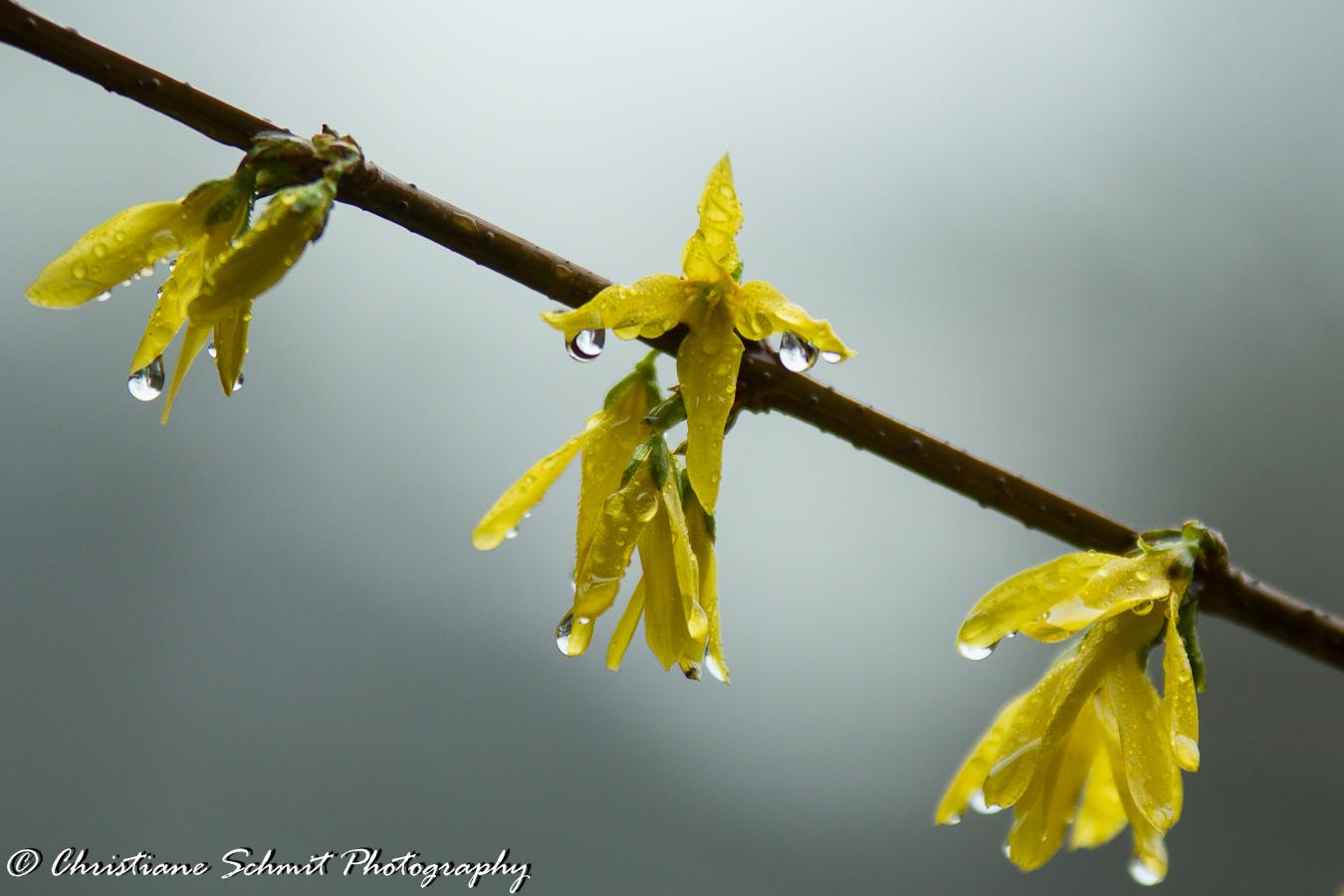 Le printemps pleure