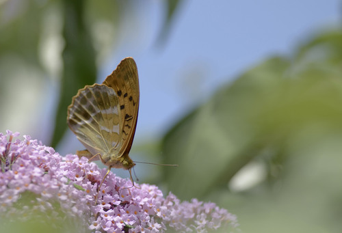 Papillons dans tous ses états !!!