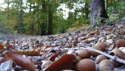Balade dans les allées de la forêt de Loches