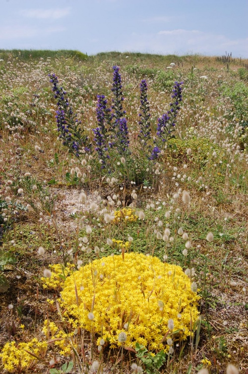photo joelle fleurs de dune