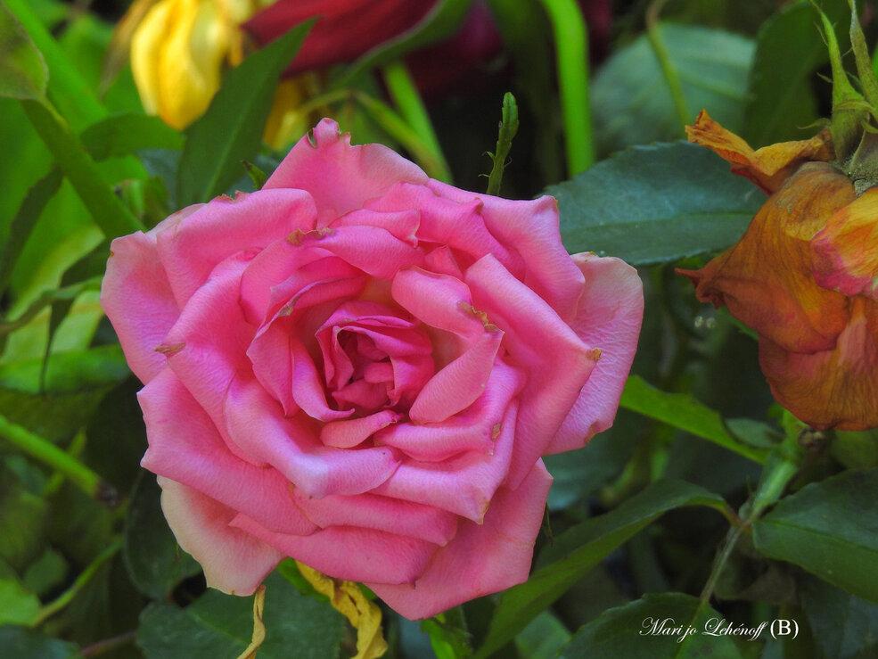 Le bouquet se fane