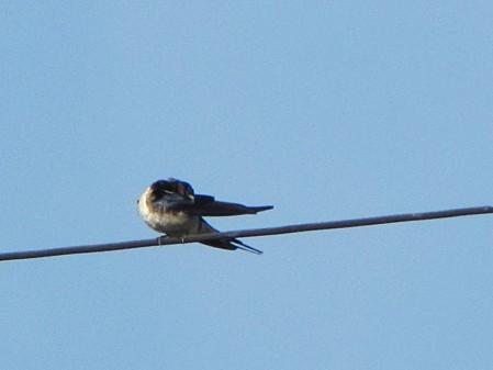 les-oiseaux-et-autres-volatiles 0682