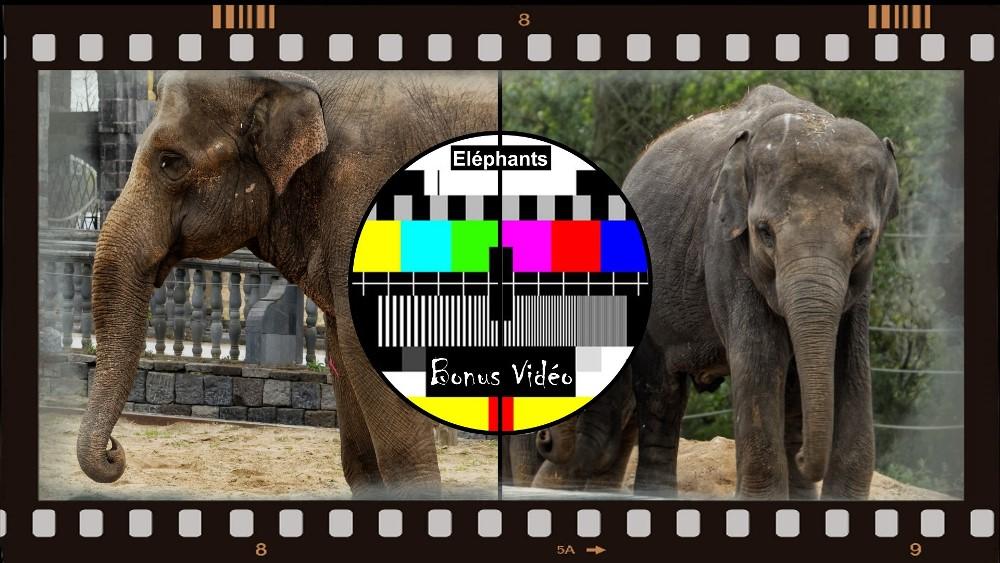 Touche-touche éléphants