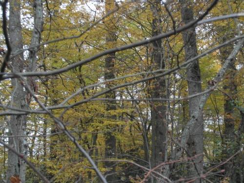 Dans la forêt du Maupas