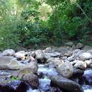 La rivière qui traverse l'Habitation (2 - Photo : Hervé (2003)