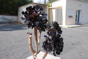 De belles plantes devant le magasin d'huitres