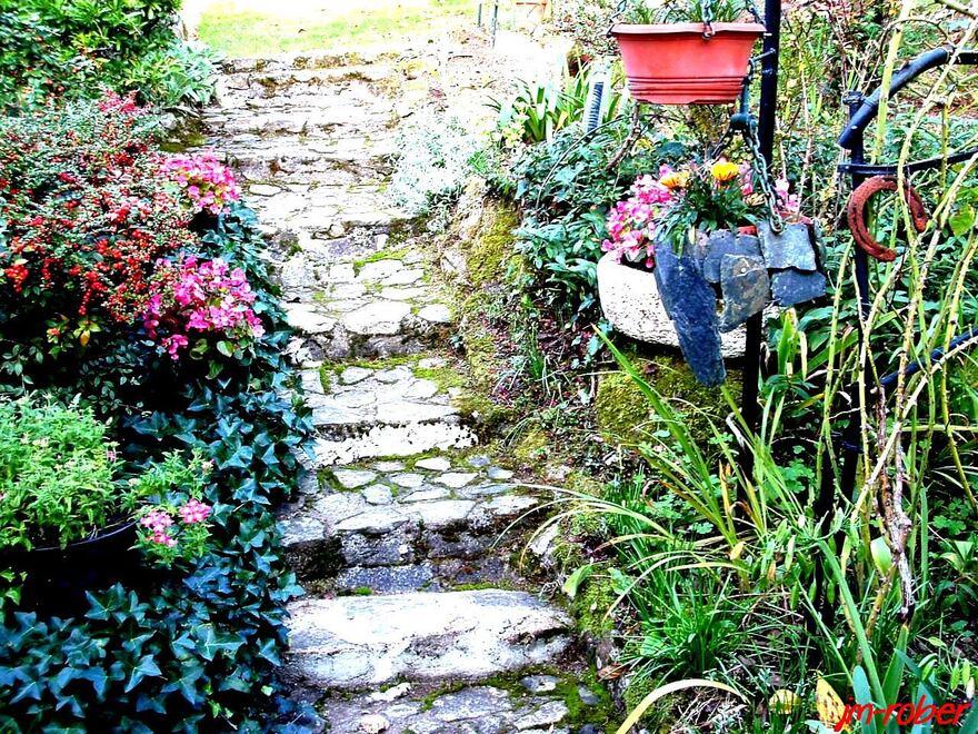 Jardin d'automne : les petits bégonias semperflorens
