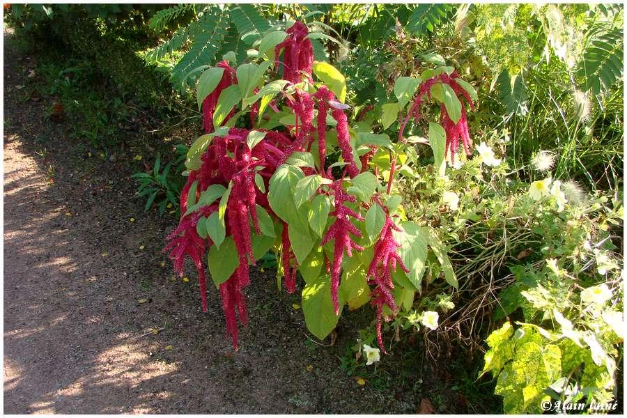 Fleurs d'automne - Cesson Sévigné