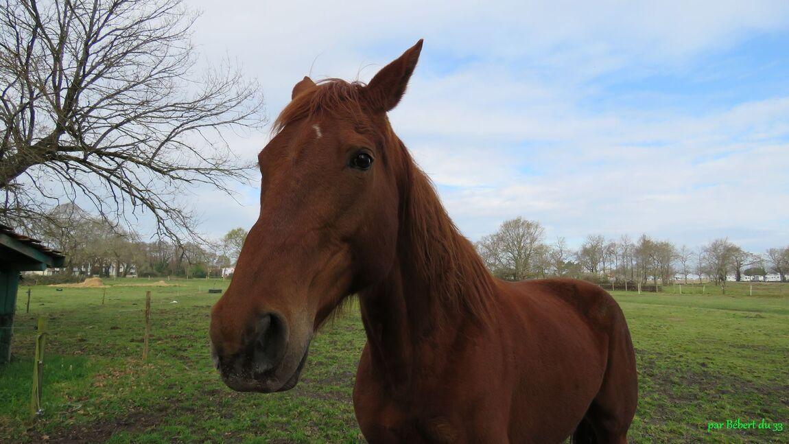 un beau cheval !