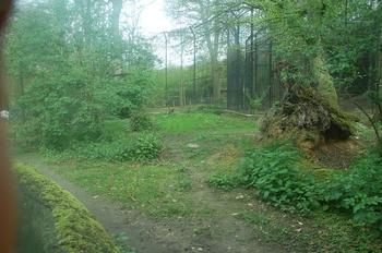 Zoo Osnabruck d50 2012 205