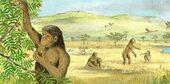 LA PREHISTOIRE - Les australopithèques