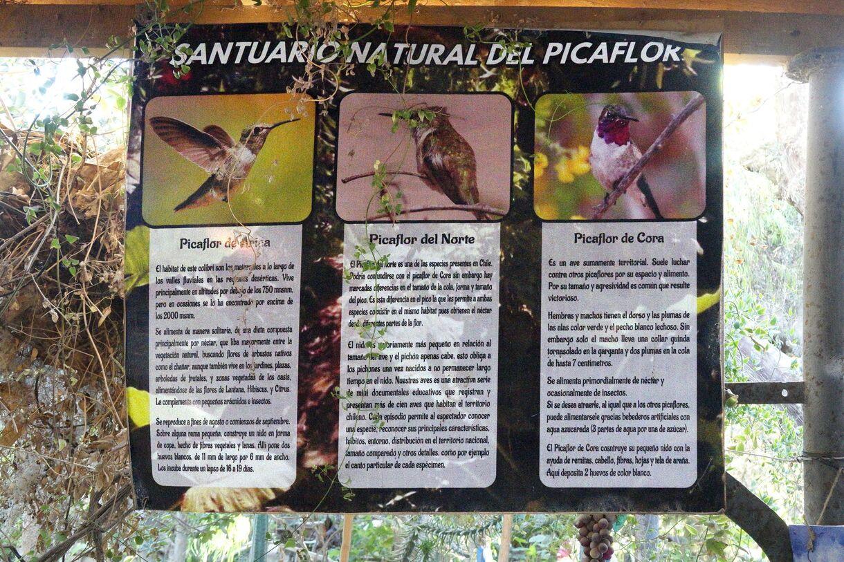 Arica ~ La Ferme aux colibris