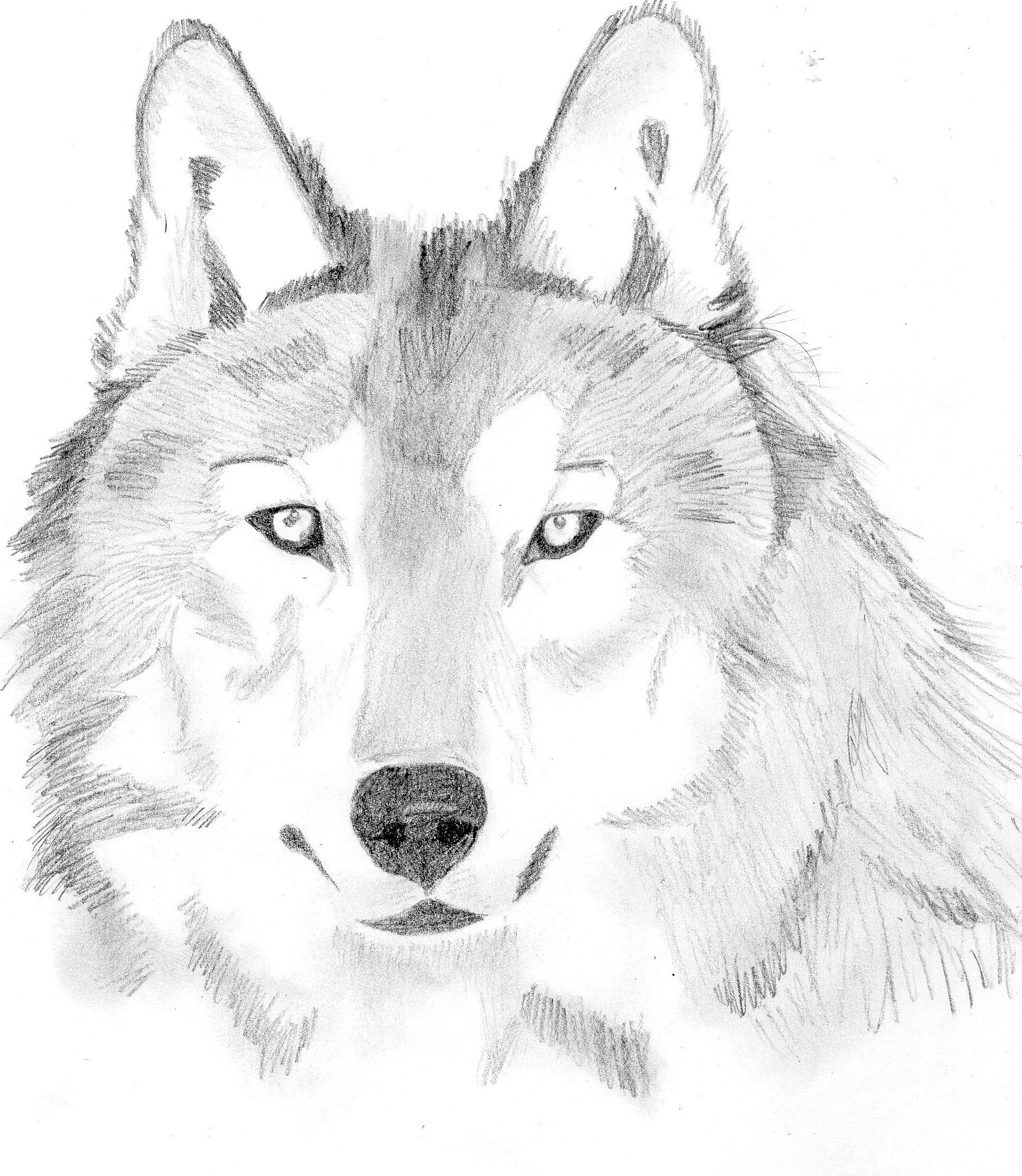 Loup Lolobild
