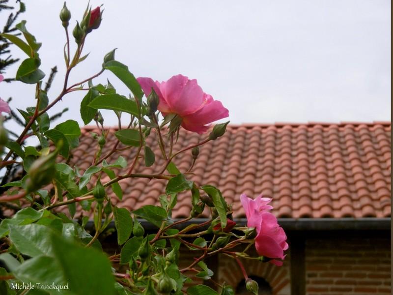 Une balade fleurie dans mon village, le 19 avril (suite)....