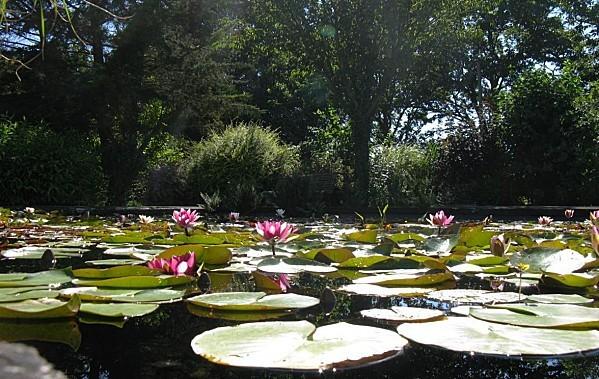 Jardin-du-Prahor-8-08-12-IMG_0448.JPG
