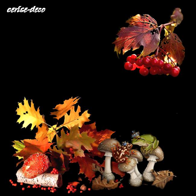 cadeau : cluster champignon