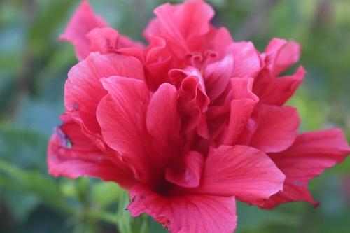 """le fleurs de mon jardin """"parisien"""""""