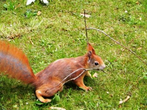 Flânerie à Nûrnberg ...avec écureuil (photos)