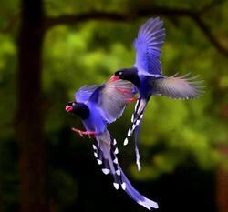 Les  oiseaux ..