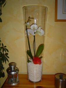 orchid-e-3.jpg