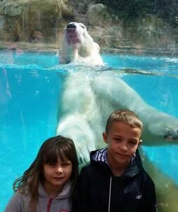Copains des ours