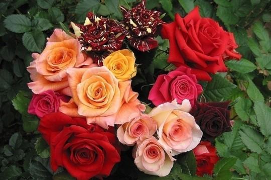 bouquet-de-roses12.jpg