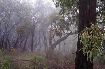 """Résultat de recherche d'images pour """"forêt méditerranéenne humide"""""""