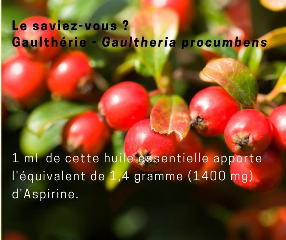 2-Gaulthérie « essence de Wintergreen »