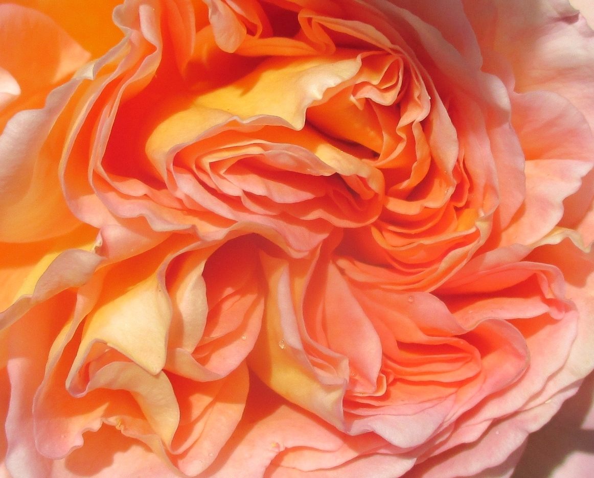 Photos perso, textures pétales de roses