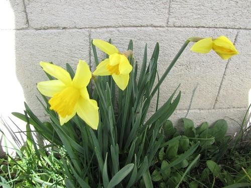 ...le printemps arrive...!