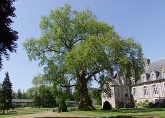 L'arbre de l'année 2013 en Normandie