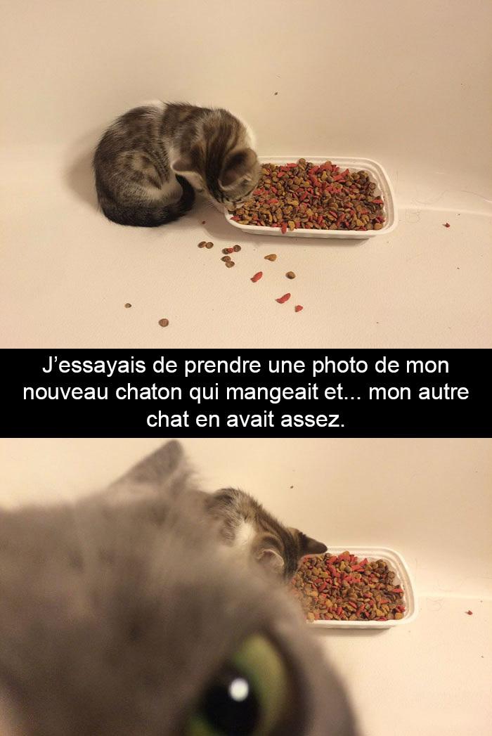20 photos de chats avec des sous-titres hilarants qui vous feront mourir de rire (nouvelles images)